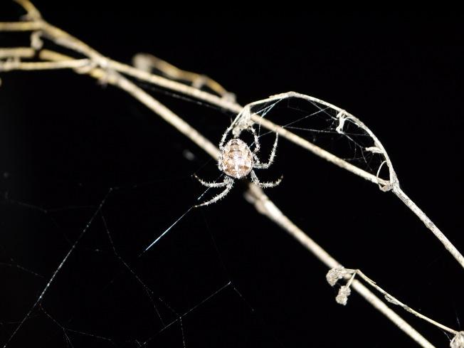garden-spider-16-butterwouldntmelt-com