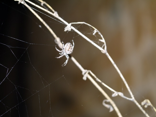 garden-spider-3-butterwouldntmelt-com