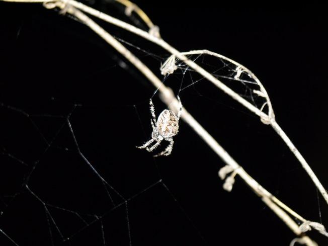 garden-spider-4-butterwouldntmelt-com