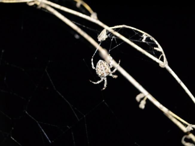 garden-spider-5-butterwouldntmelt-com