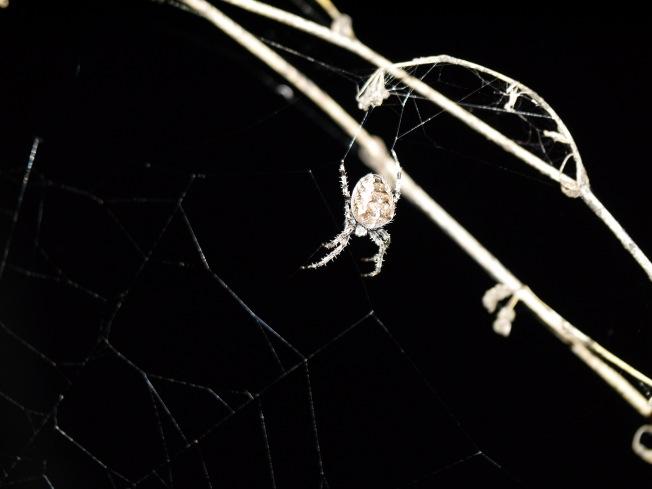 garden-spider-7-butterwouldntmelt-com