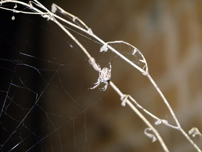 garden-spider-9-butterwouldntmelt-com