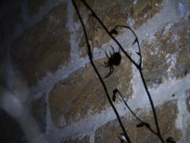garden-spider-butterwouldntmelt-com